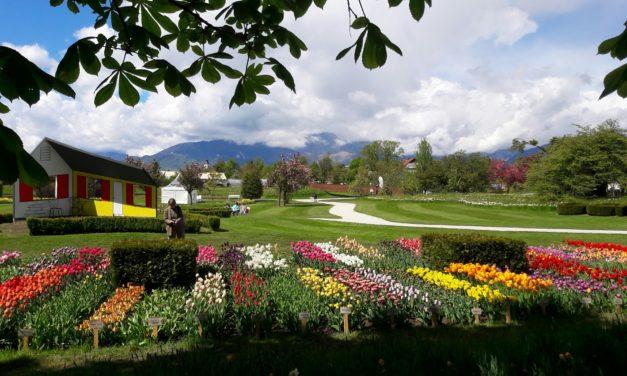 Zur Tulpenblüte in´s Arboretum bei Laibach