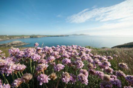 Saisoneröffnungsfahrt Blumenriviera und Côte d´Azur