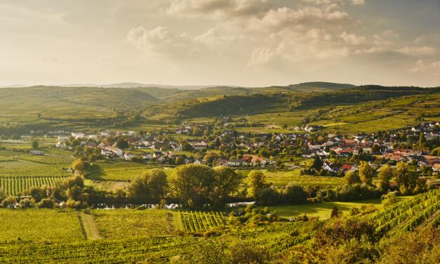 """""""Erlebnistage im Kamptal – Wein & Garten in Harmonie"""""""