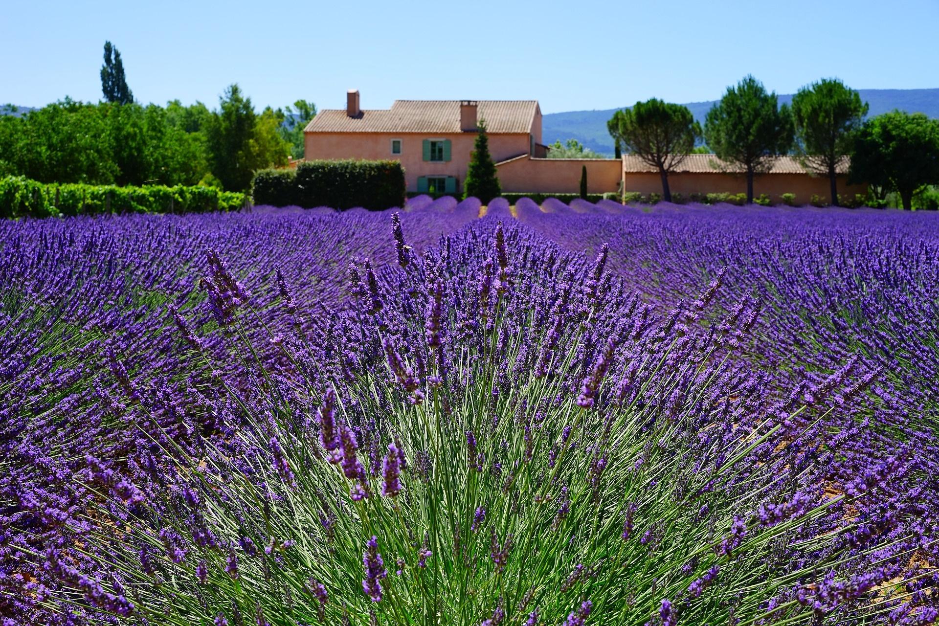Über Pfingsten – Zauber der Provence und Camargue
